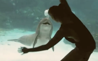 Girl Makes Dolphin Laugh [VIDEO]