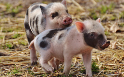 How Can You Talk To Kids About Factory Farming? These Books Can Help.