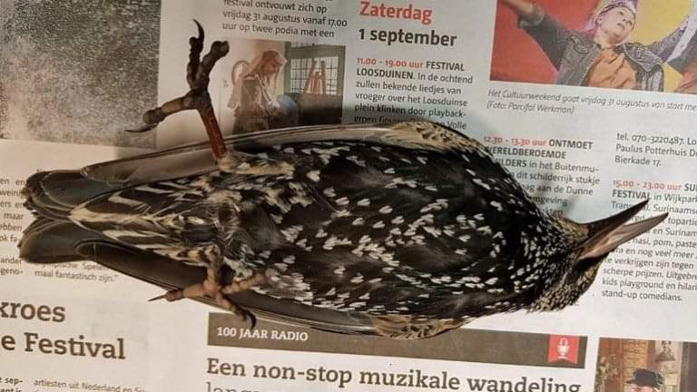 Hundreds of Birds Dead During 5G Experiment in The Hague, Netherlands