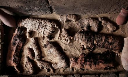 Scientists Find Never-Before-Seen Mummies In Ancient Saqqara Tomb