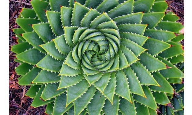 Can Sacred Geometry Help Evolve Your Consciousness?