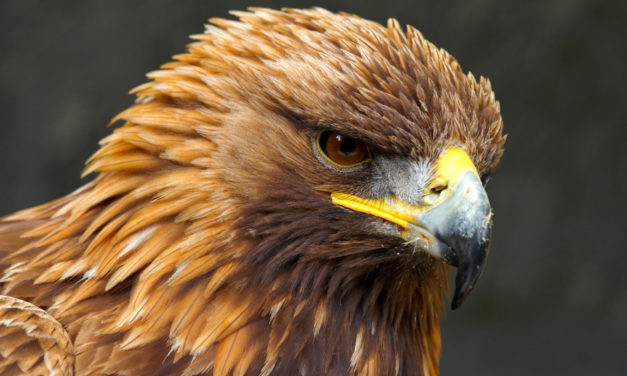 Ascension Glossary – Golden Eagle Grid