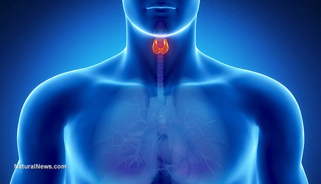 The Thyroid and Gut Connection