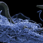 Scientists Identify Vast Underground Ecosystem That Is Twice The Size Of World's Oceans [VIDEO]