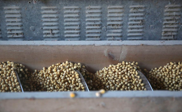 China imports zero U.S. soybeans in November for first time since trade war started
