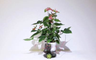 Elowan – Cyborg plant that uses robotic augmentation to reach the light
