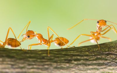 Ant Colonies Have Memories That Their Individual Members Don't Have