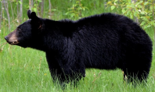 3-Year-Old Boy Missing for Days in Freezing Weather Says a Bear Kept Him Safe