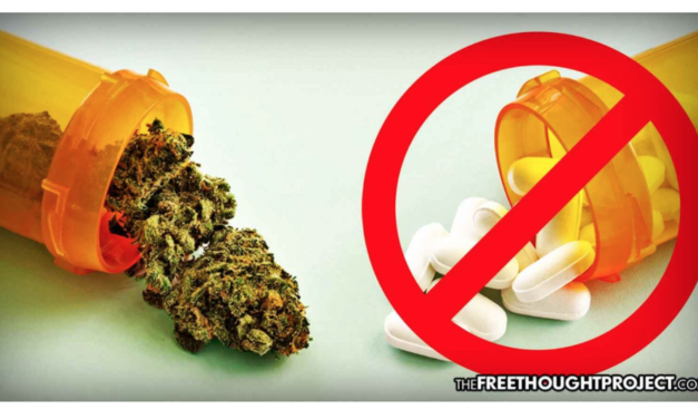 Big Pharma's Worst Nightmare, Survey Finds Most Medical Marijuana Users Quitting Prescription Drug Use