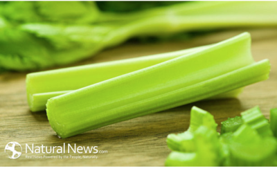 Celery: The Humble Veggie with Cancer Healing Properties