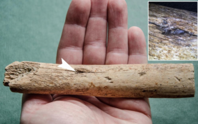 Archaeologists Find 25,000-Year-Old Mammoth Rib Pierced With An Arrow From Early Human Hunters