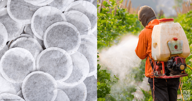 8 Popular Tea Bag Companies That Contain Illegal Amounts of Deadly Pesticides