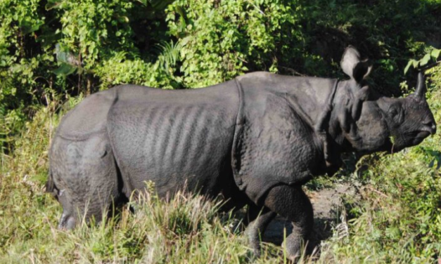 India-Nepal agreement to boost transborder conservation of rhinos, tigers