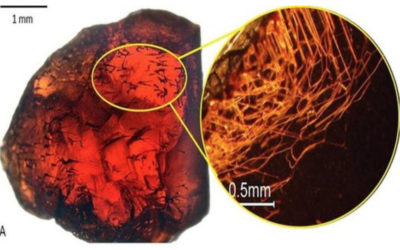 Garnets found to be honeycombed with intricate tunnel patterns – researchers speculate they are biologically caused