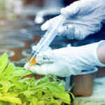 GMO Foods Will Soon Be Mislabeled As Biofortified