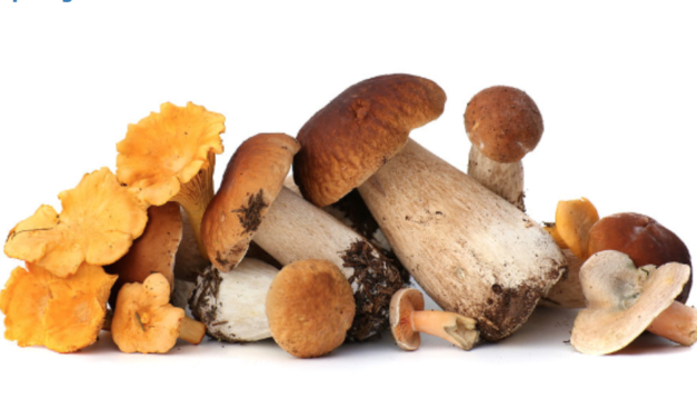 Eat These 7 Mushrooms to Live Longer