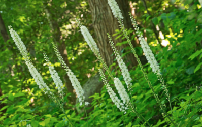 3 Powerful Indigenous Herbs From North America