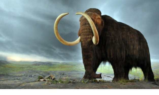 28,000-Year-Old Woolly Mammoth Cells Brought Back to Life by Scientists