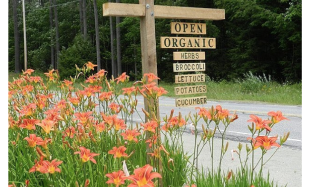 Local, Small-Scale Organic Farming Poised to Save the World — Here's How