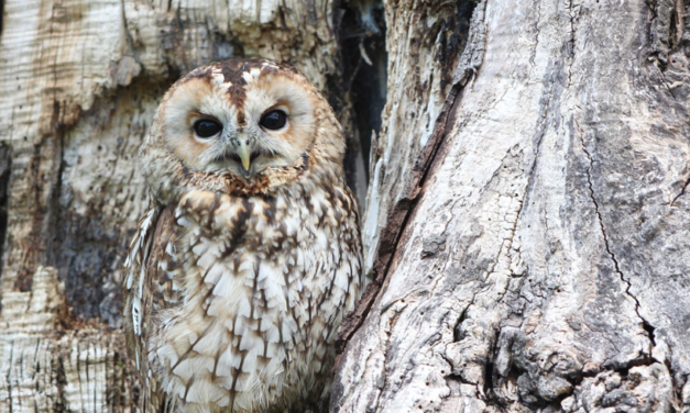 From Owls to Aliens: Changing Forms