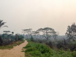 U.S. companies implicated in illegal timber trade from West Africa