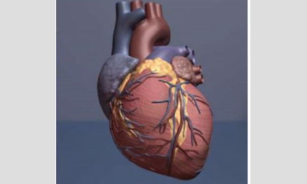 Israeli scientists print the world's first 3D heart