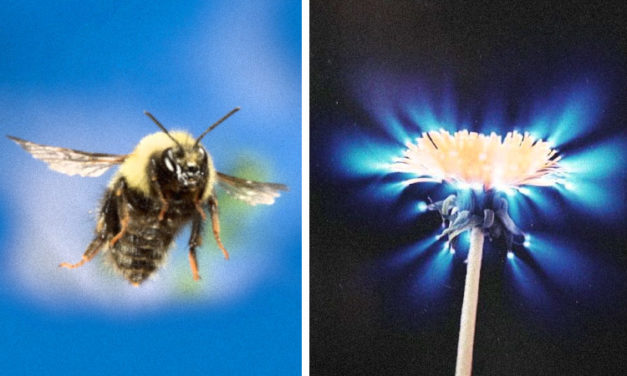 Bioelectricity And Chi – Bees Can Sense The Energy Fields Of Flowers To Communicate With Them