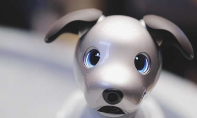 Sony's Robot Dog Banned In Illinois Over Facial Recognition