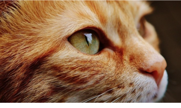 Scientists Confirm That Cats Do Know Their Own Name, They Just Choose to Ignore Us