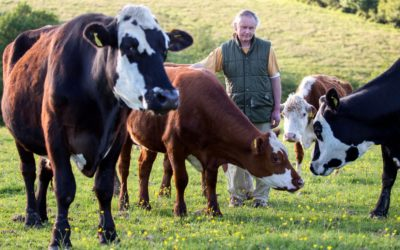 """Farmer Gives His Cows To A Sanctuary After Seeing Them """"Terrified"""""""