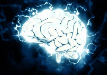 Oops! The Brain DOES Have An Immune System