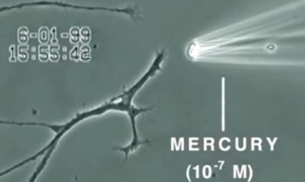 WATCH: VIDEO SHOWS WHAT MERCURY DOES TO A BRAIN NEURON IN JUST 20 MINUTES