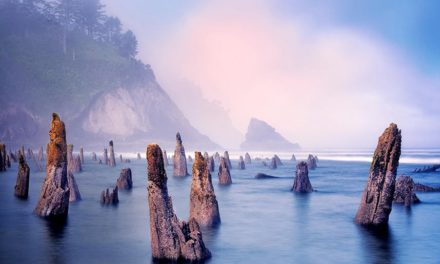 The Ghost Forest of Neskowin, Oregon