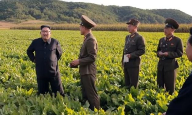 "North Korea faces food crisis after ""worst harvest in a decade"""
