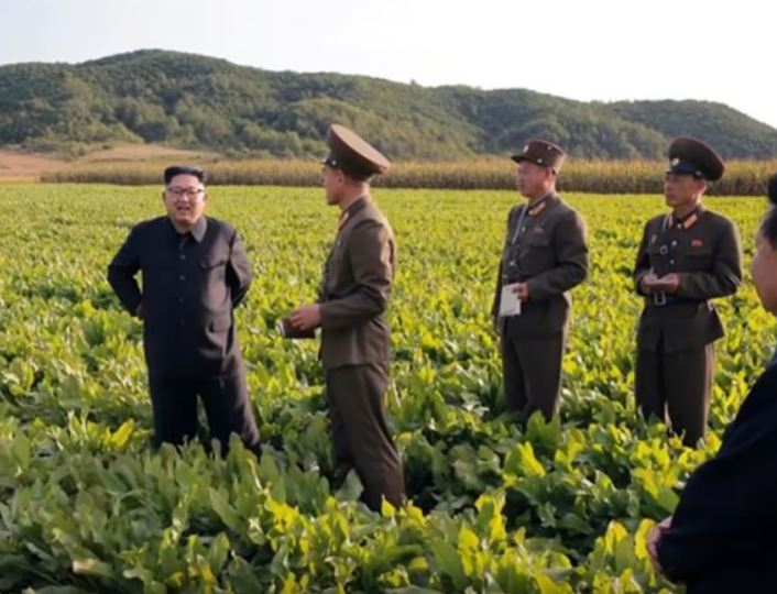 """North Korea faces food crisis after """"worst harvest in a decade"""""""