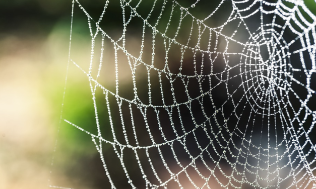 Spider species discovered to use catapult technology to fling sticky webs at prey… previously scientists believed only humans possessed such weapons tech