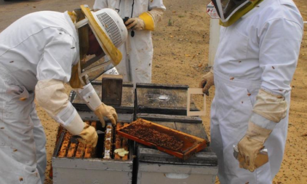 Honey Bee Colonies Across Europe Plunge 16%, Says Study