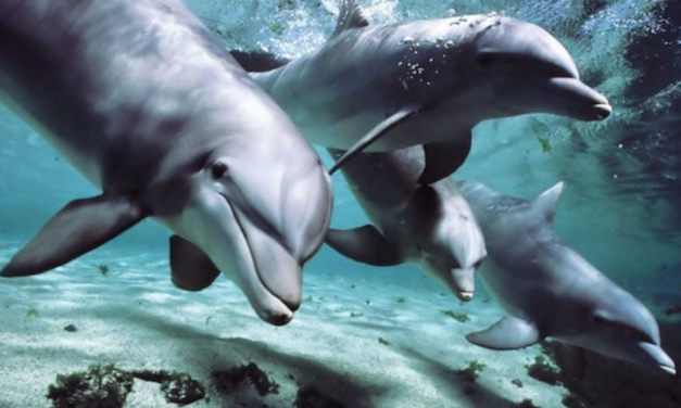 CANADA JUST OFFICIALLY BANNED DOLPHIN AND WHALE CAPTIVITY