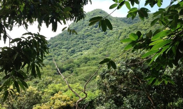 "El Salvador Legislative Assembly Declares ""Forests Are Living Entities"""