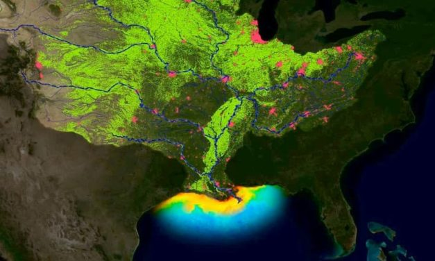 2019 'Dead Zone' In Gulf Of Mexico May Be Second Largest On Record