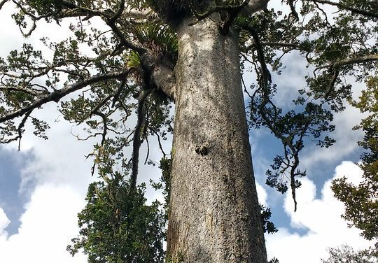 40,000-Year-Old Tree Shows What Happened During Earth's Last Magnetic Pole Reversal