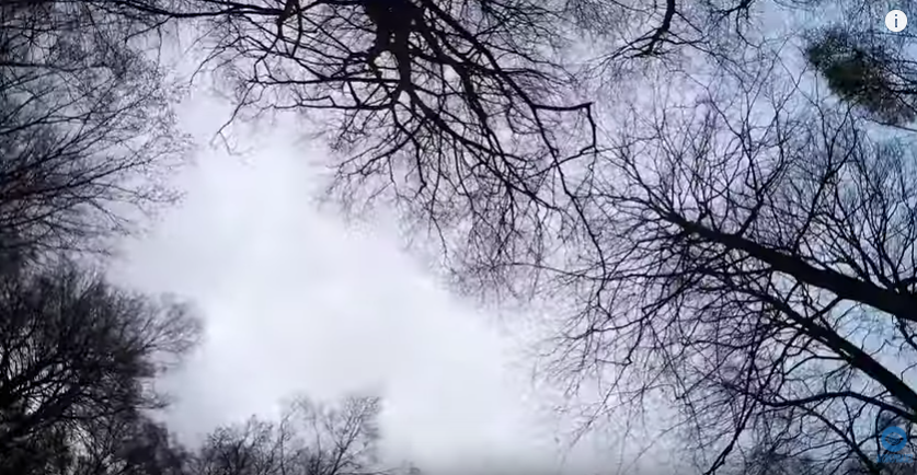 The Ghosts of Epping Forest In Plain Sight [VIDEO]