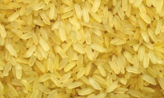 Fools gold: Study finds beta carotene in GMO golden rice mostly disappears before it can be eaten