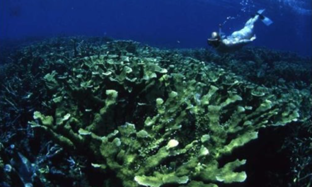 Coral reefs dying because of pollution, 30 years of unique data reveals