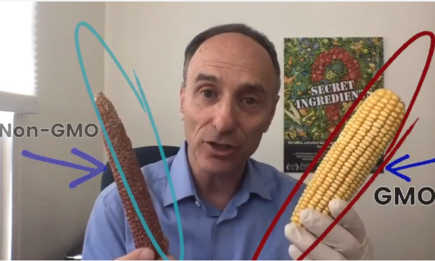 Farmer Conducts Experiment Using GMO and Non-GMO Corn, Discovers Sobering Truth That Animals Know and Humans Don't