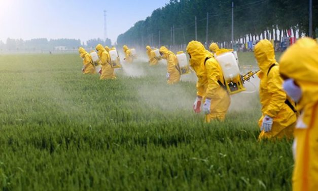 Chlorpyrifos: Playing Pesticide Politics With Children's Health