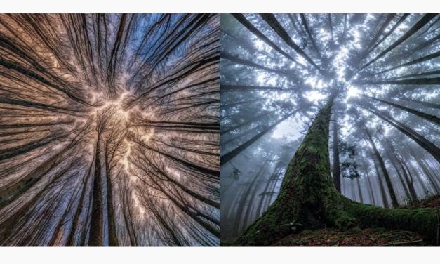 The Magical Beauty Of Looking Up At Trees In The Middle Of A Forest Capture By Photographer