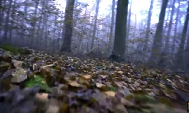 Cryptozoology. The Dogman of Michigan [VIDEO]