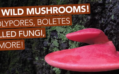 10 Wild Mushrooms! Polypores, Boletes, Gilled Fungi, & More! [VIDEO]