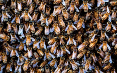 Insect 'apocalypse' in U.S. driven by 50x increase in toxic pesticides